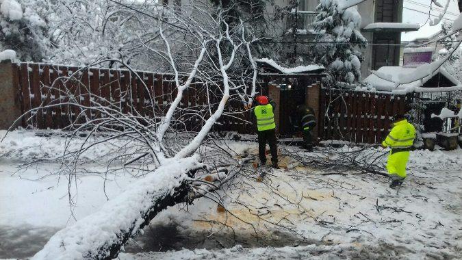 Srbija pod snegom, opasnost od preloma grana ili stabla