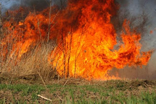 Gori borova šuma na Korčuli, 40 vatrogasaca na terenu