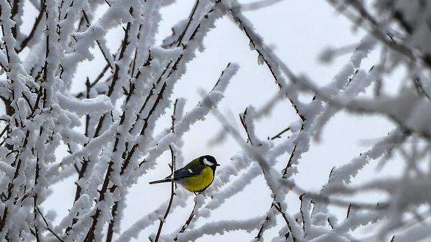 Danas hladno, uz povećanje senžnog pokrivača